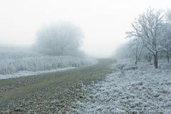 Brouillard dans la forêt au jour d'hiver Images libres de droits