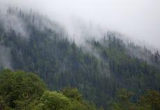 Brouillard dans la forêt de montagne Image libre de droits