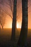 Brouillard dans la forêt la nuit Image stock