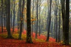 Brouillard dans la forêt pendant l'automne Images stock