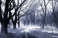 Brouillard dans la forêt Photographie stock