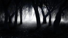 Brouillard dans la vieille forêt illustration stock