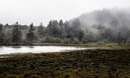 Brouillard dans les arbres à un marécage côtier photographie stock libre de droits