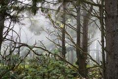 Brouillard dans les branchements Photographie stock libre de droits