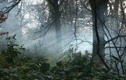 Brouillard dans les régfions boisées Photos stock