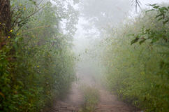 Brouillard de couloir photographie stock libre de droits