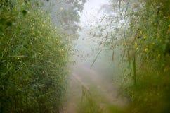 Brouillard de couloir image libre de droits