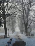 Brouillard de début de la matinée de parc d'hiver Images stock