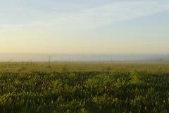 Brouillard de début de la matinée plus de images libres de droits