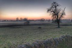 Brouillard de début de la matinée Images libres de droits