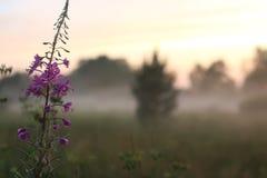 Brouillard de fleur de coucher du soleil Images libres de droits