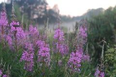 Brouillard de fleur de coucher du soleil Image libre de droits