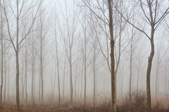 Brouillard de forêt de l'hiver Photographie stock libre de droits