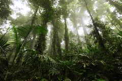Brouillard de forêt humide Images stock
