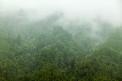 Brouillard de forêt Images stock