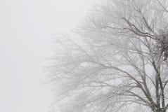 brouillard de givre Photos libres de droits