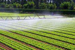 Brouillard de l'eau d'irrigation photos libres de droits