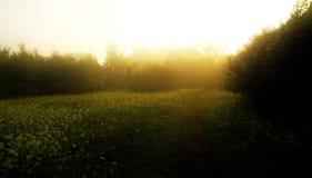 Brouillard de lever de soleil Photos libres de droits