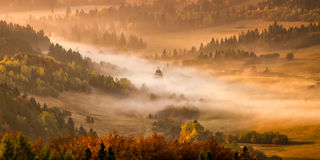 Brouillard de lever de soleil d'arbres Photo libre de droits