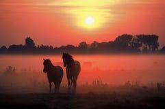 Brouillard de lever de soleil de chevaux Image stock