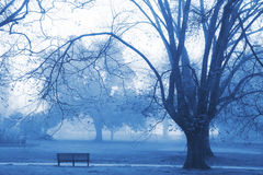 Brouillard de matin Photographie stock libre de droits