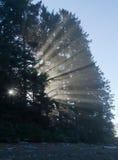 Brouillard de matin Photos libres de droits