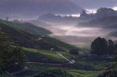 Brouillard de matin image libre de droits