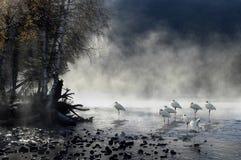 Brouillard de matin avec des oiseaux Images stock