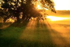 Brouillard de matin avec l'arbre Photo stock