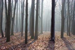 Brouillard de matin dans la forêt image libre de droits