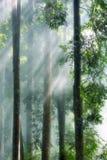 Brouillard de matin dans la forêt tropicale Images stock