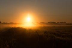 Brouillard de matin dans le domaine Photos libres de droits