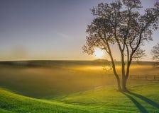 Brouillard de matin dans le pays de cheval Photographie stock