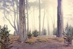 Brouillard de matin dans les bois Images stock