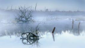 Brouillard de matin dans les marécages photos stock