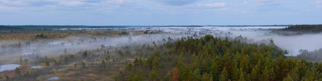 Brouillard de matin dans un marais image stock