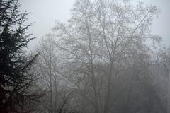 Brouillard de matin en Allemagne - scène mystique photo libre de droits