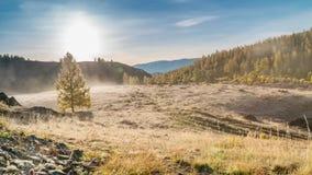 Brouillard de matin en montagnes Gelée sur l'herbe et les arbres banque de vidéos