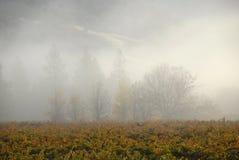 Brouillard de matin et vigne de la Californie image libre de droits