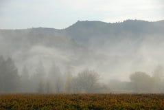 Brouillard de matin et vigne de la Californie image stock