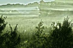 Brouillard de matin sur le pré Images libres de droits