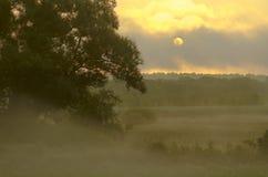 Brouillard de matin sur le pré Images stock