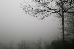 Brouillard de montagne Image stock