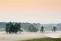 Brouillard de soirée Photos libres de droits
