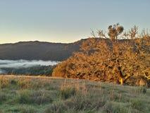 Brouillard de sonoma de lac Photos libres de droits