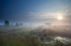 Brouillard dense au-dessus de marais au lever de soleil Photographie stock libre de droits