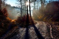 Brouillard en novembre photos stock