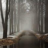 Brouillard en parc Image stock