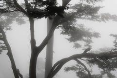 Brouillard et arbres Photo stock