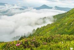 Brouillard et fleur de rhodonendron en montagnes photos libres de droits